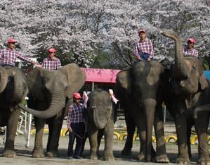 象たちのパフォーマンスに大興奮!道の駅「あずの里いちはら」