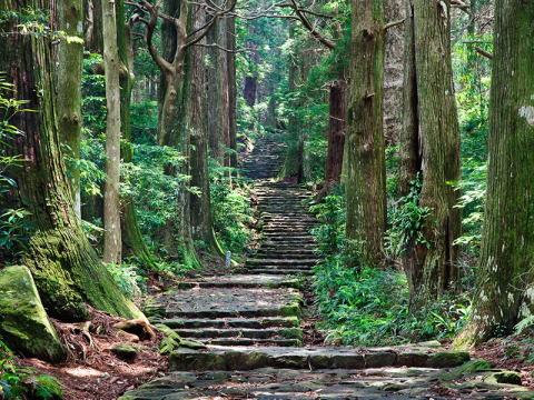木の国 和歌山県!