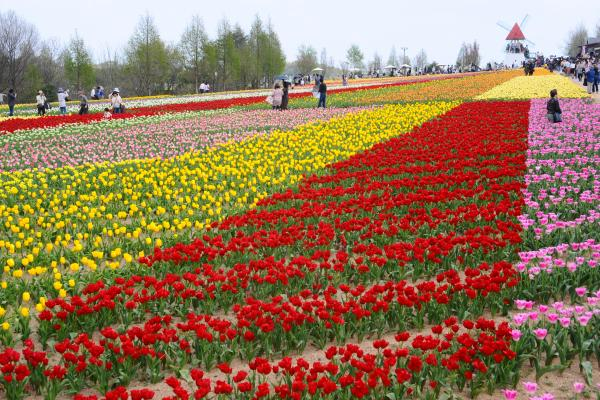 http://www.kankou.pref.hiroshima.jp/sys/data?page-id=10853
