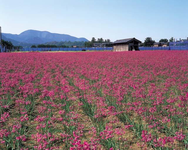 出典:www.pref.fukui.lg.jp