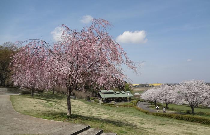 自然と歴史、芸術に触れる旅 茨城県筑西市
