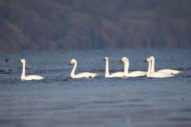 味覚と視覚。2つで楽しむ琵琶湖