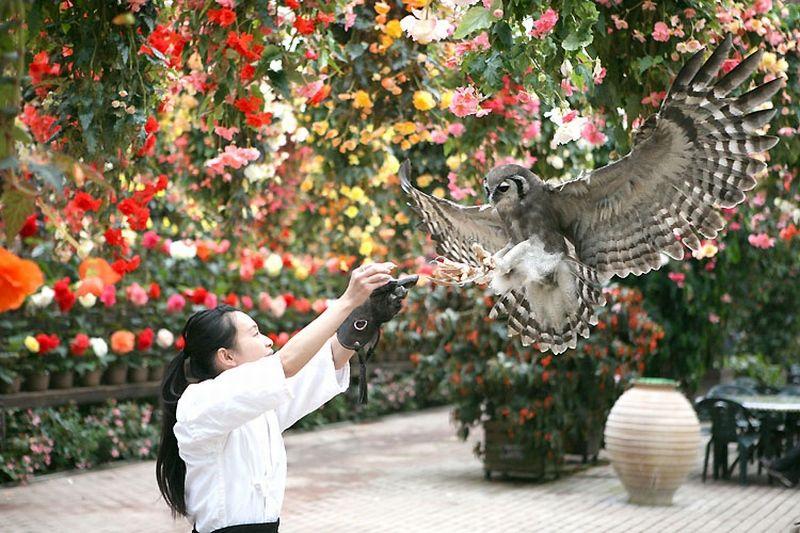 富士山をバックに鳥や動物に癒される 「道の駅 富士川楽座」