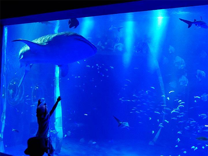 のとじま水族館で能登半島の魚とふれあおう 「道の駅 能登食祭市場」