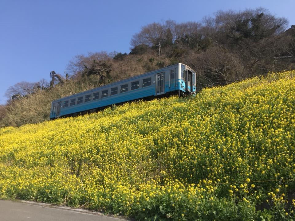双海町は閏住(うるすみ)地区の菜の花畑で行われる菜の花祭り
