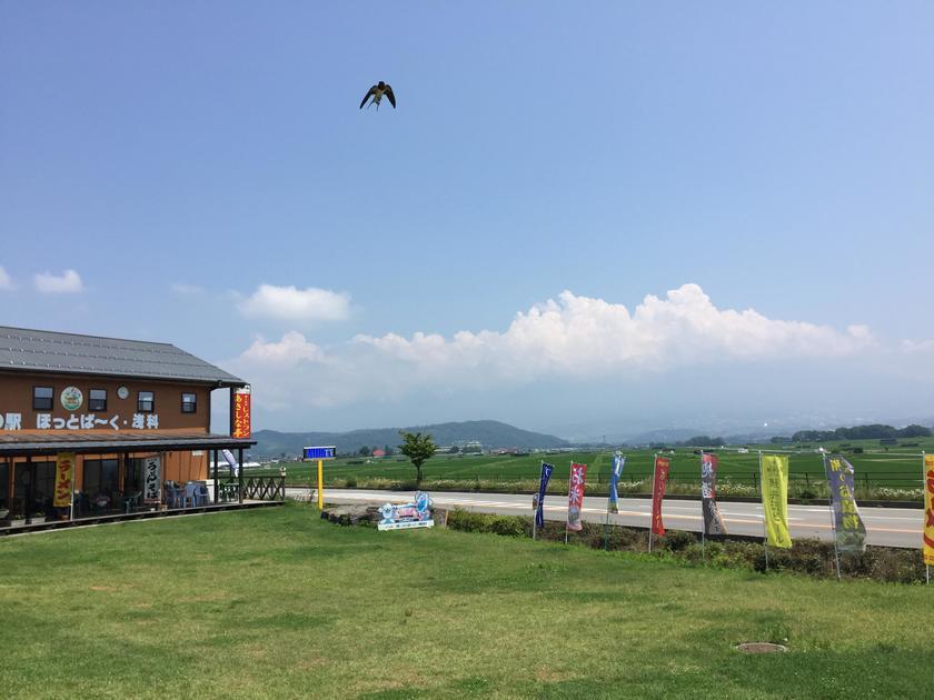 浅間山と田んぼの広々とした景観【道の駅 ほっとぱ〜く浅科】